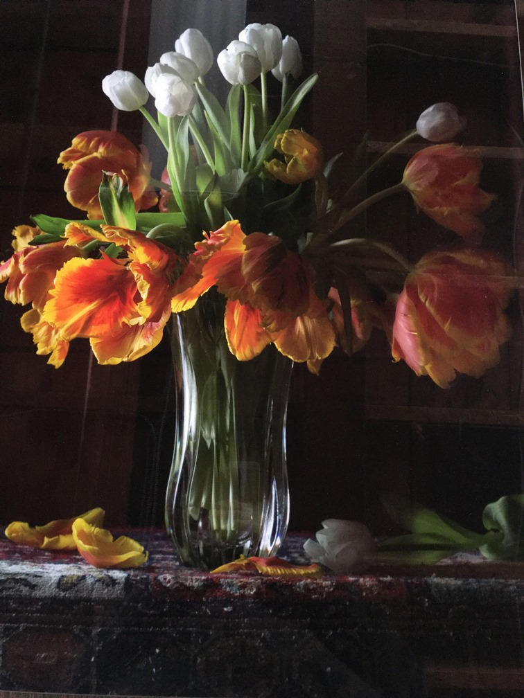 Photographer Brian Maguire photo of Tulips